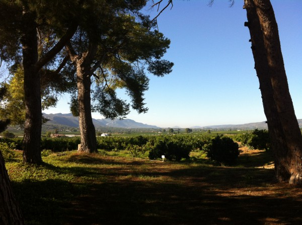 41-blick-durch-pinien-auf-orangenfelder-casa-del-mas